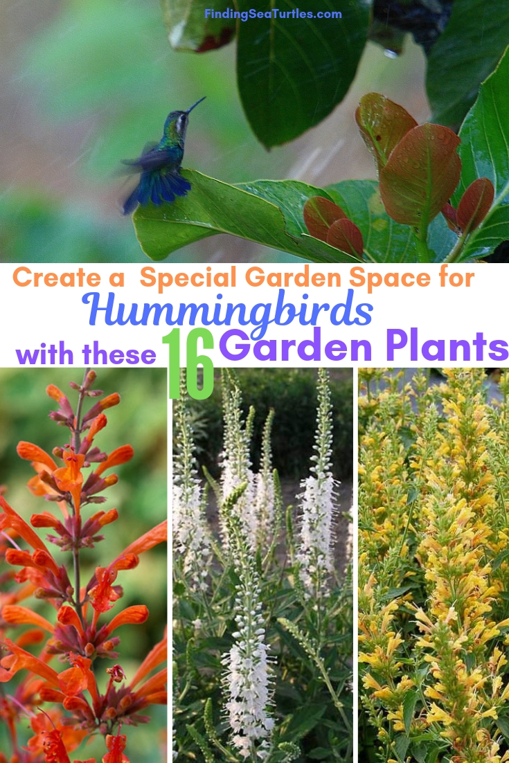 Create A Special Garden Space For Hummingbirds With 16 Garden Plants #Perennials #Garden #Gardening #Landscape #PerennialsForHummingbirds #Hummingbirds #Pollinators #GardenPollinators