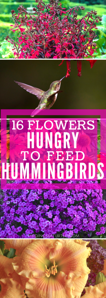 16 Perennials for Hungry Hummingbirds #Hummingbirds #Gardening #HummingbirdGarden #GardenForHummingbirds #Butterflies #WhiteFlowerFarm