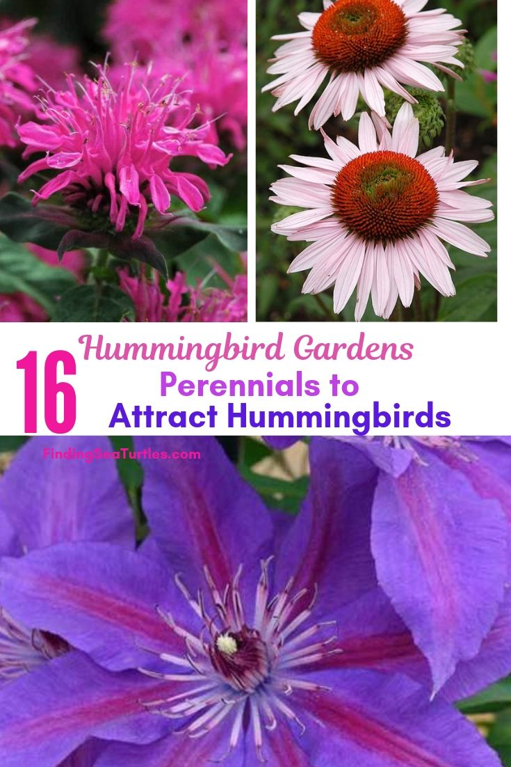 Hummingbird Gardens 16 Perennials To Attract Hummingbirds #Perennials #Garden #Gardening #Landscape #PerennialsForHummingbirds #Hummingbirds #Pollinators #GardenPollinators
