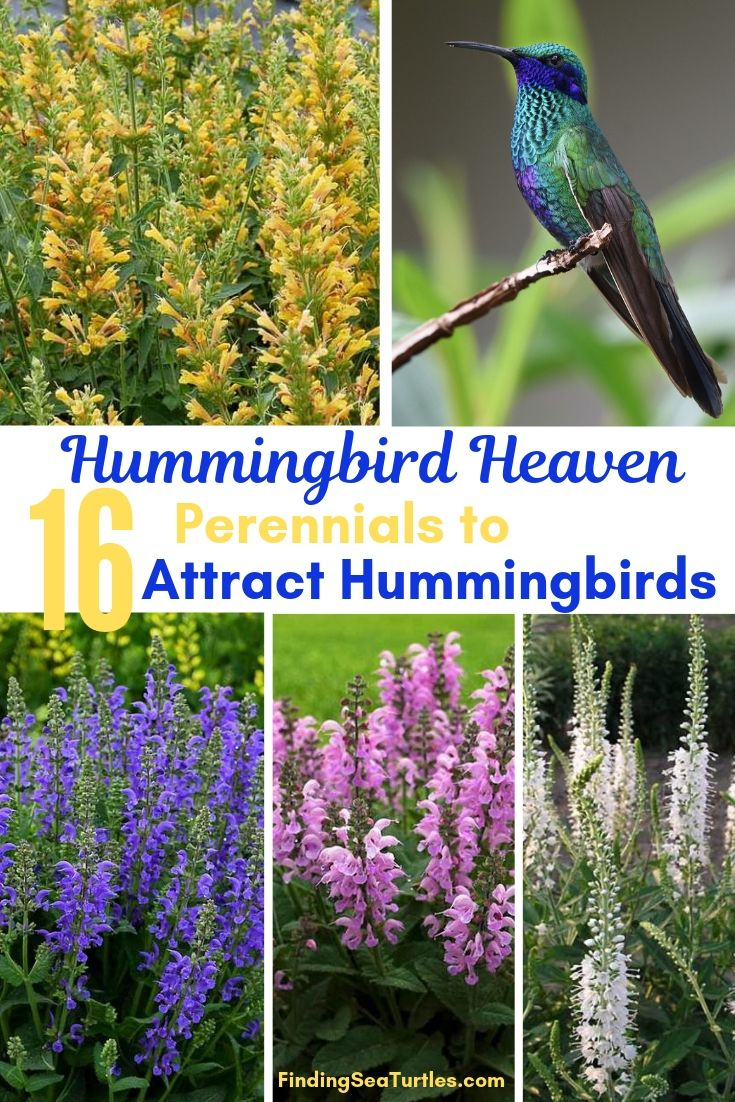 16 Perennials That Attract Hummingbirds To Your Garden Finding