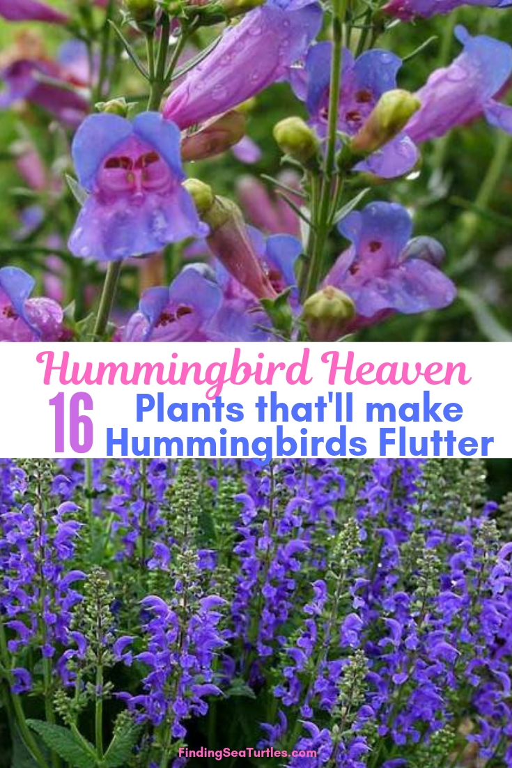 Hummingbird Heaven 16 Plants That'll Make Hummingbirds Flutter #Perennials #Garden #Gardening #Landscape #PerennialsForHummingbirds #Hummingbirds #Pollinators #GardenPollinators