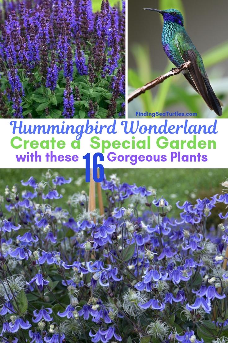 Hummingbird Wonderland Create A Special Garden With 16 Gorgeous Plants #Perennials #Garden #Gardening #Landscape #PerennialsForHummingbirds #Hummingbirds #Pollinators #GardenPollinators