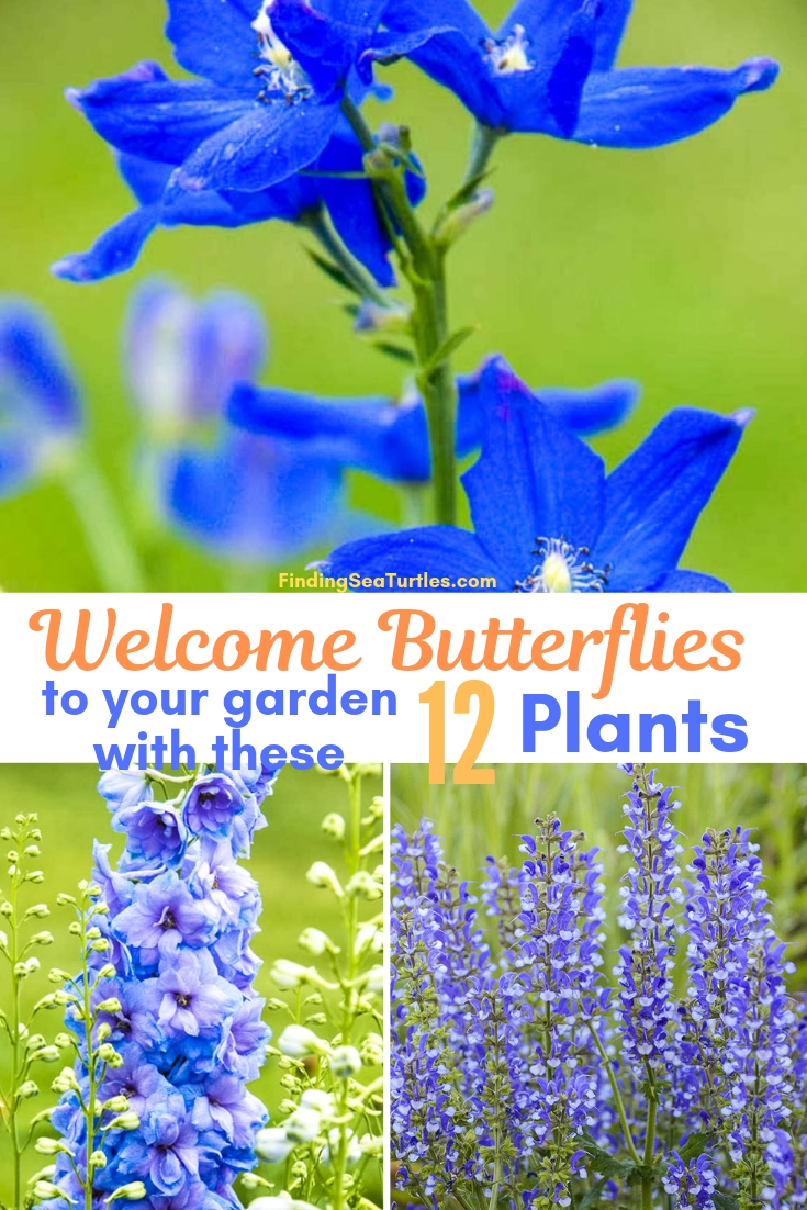 Welcome Butterflies To Your Garden With These 12 Plants #Perennials #Garden #Gardening #Landscape #PerennialsForButterflies #Butterflies #Pollinators #GardenPollinators #ButterflyGarden