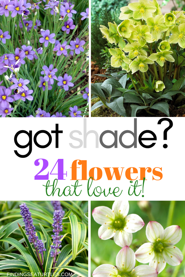 Got Shade? 24 Spectacular Plants That Will Love It! #ShadeGarden #ShadePerennials #Organic #ShadeLoving #problemGarden