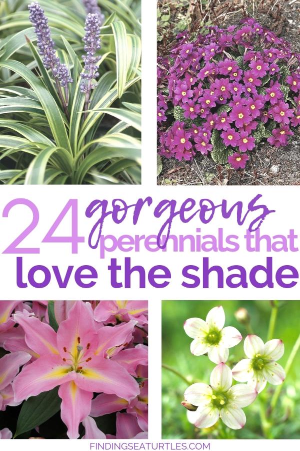 Got Shade? 24 Spectacular Plants That Will Love It! #ShadeGarden #ShadePerennials #Organic #ShadeLoving #problemGarden