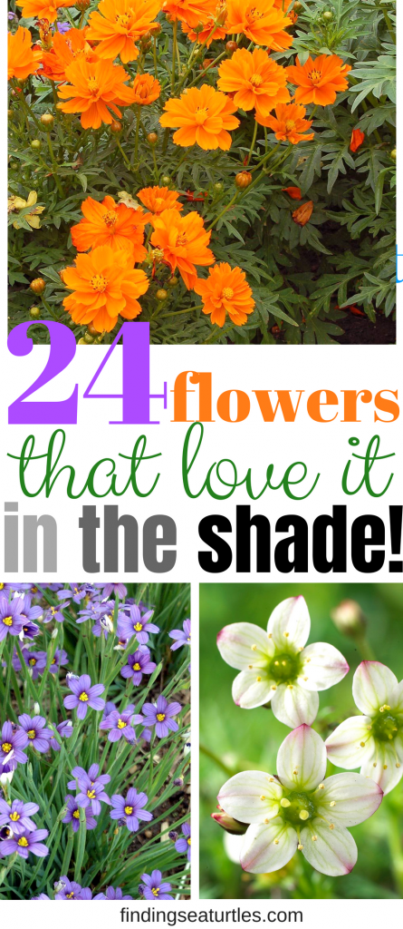 24 Spectacular Shade Garden Perennials #ShadeGarden #ShadePerennials #Organic #ShadeLoving