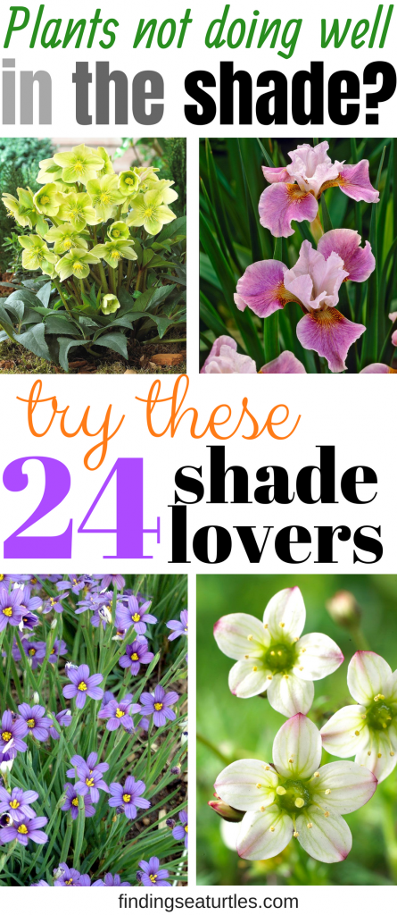 Problem with shade garden? Try these 24 Spectacular shade loving plants #ShadeGarden #ShadePerennials #Organic #ShadeLoving #problemGarden
