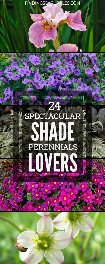 24 Spectacular Shade Garden Perennials #ShadeGarden #ShadePerennials #Organic #ShadeLoving