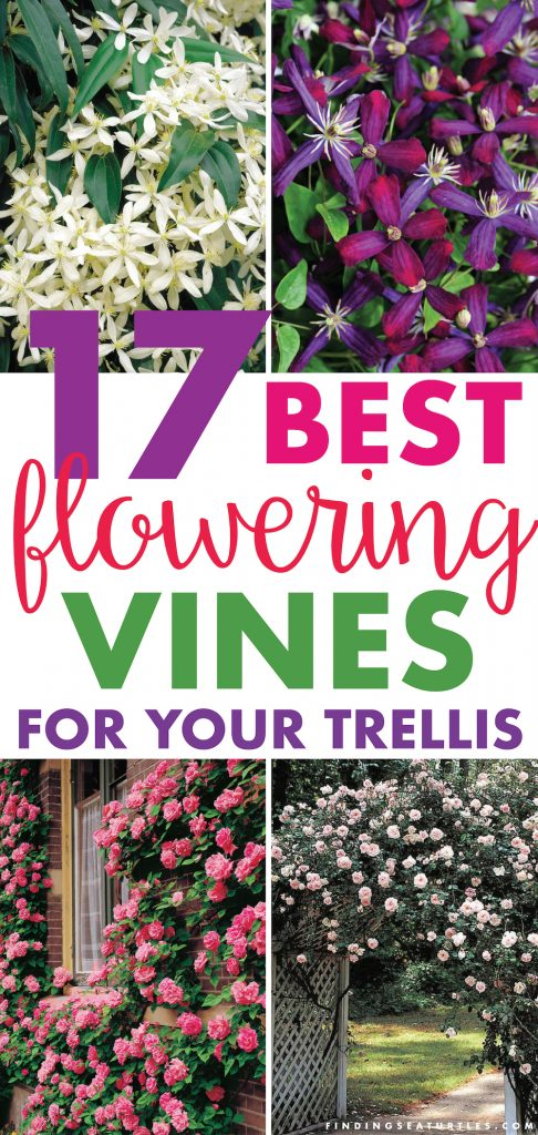 17 BEST Flowering Vines For Your Arbor, Trellis, or Pergola #PergolaVine #ArborVine #TrellisVine #Trellis #Arbor #Pergola #floweringvine