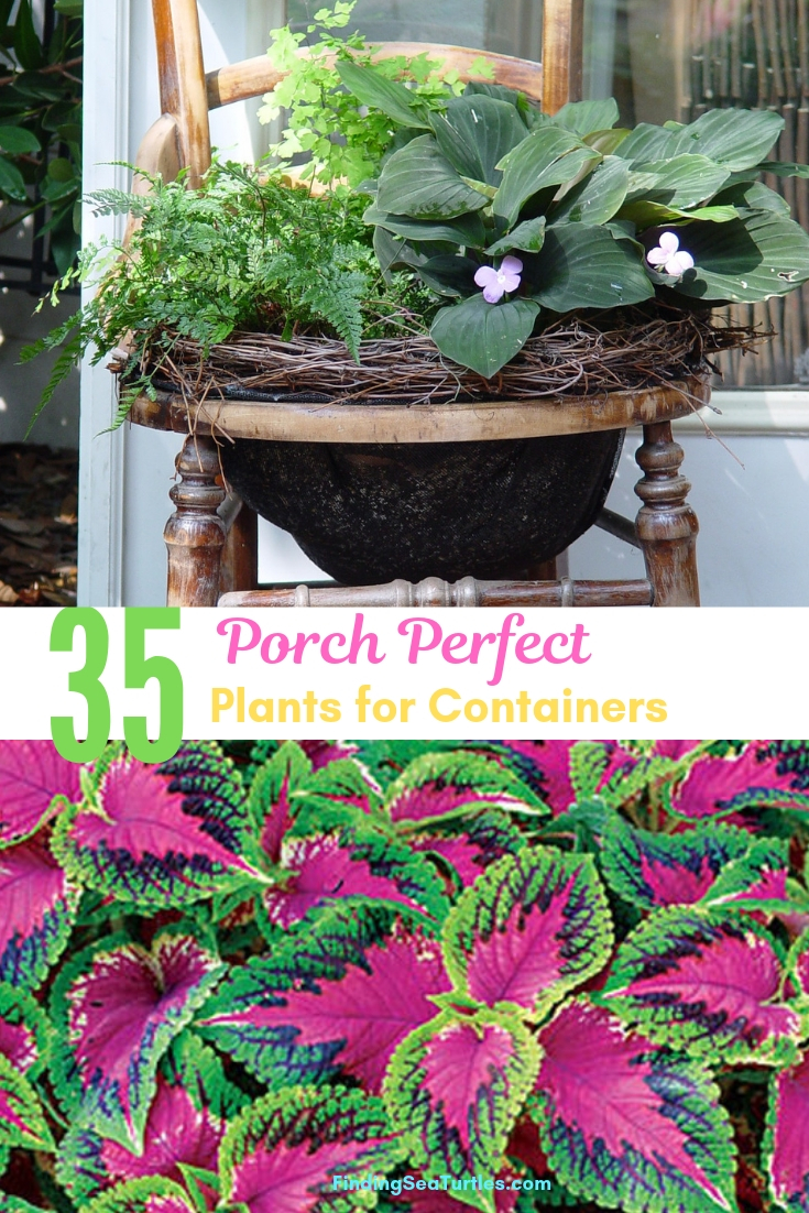35 Porch Perfect Plants For Containers #Containers #ContainerGardening #Gardens #Gardening #Porch #Deck #Patio #Landscape