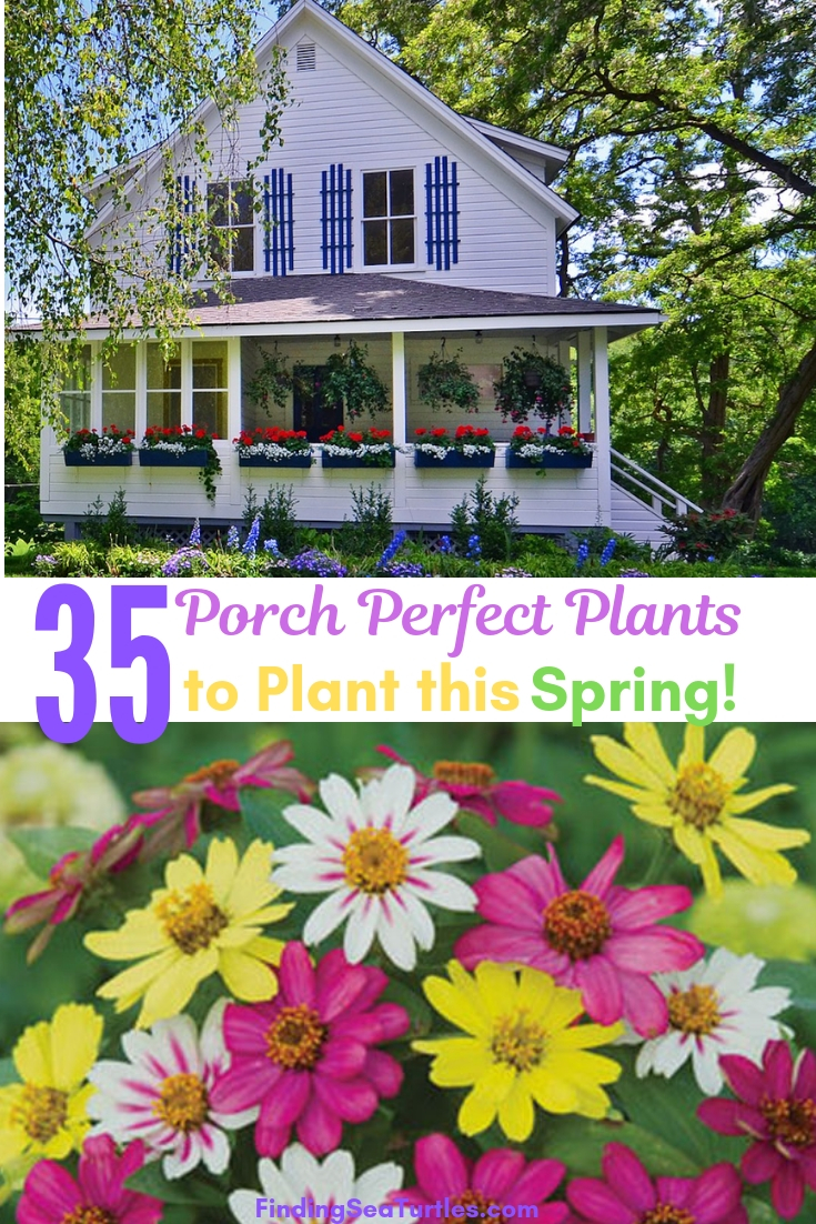 35 Porch Perfect Plants To Plant This Spring! #Containers #ContainerGardening #Gardens #Gardening #Porch #Deck #Patio #Landscape