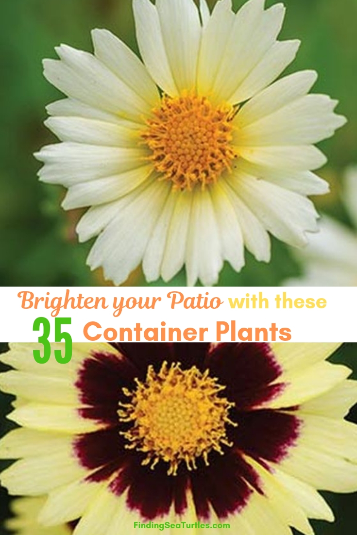Brighten Your Patio With These 35 Container Plants #Garden #Gardening #ContainerPlants #HangingBaskets #WindowBoxes #ContainerGardening #Porch #Patio #Balcony #Deck