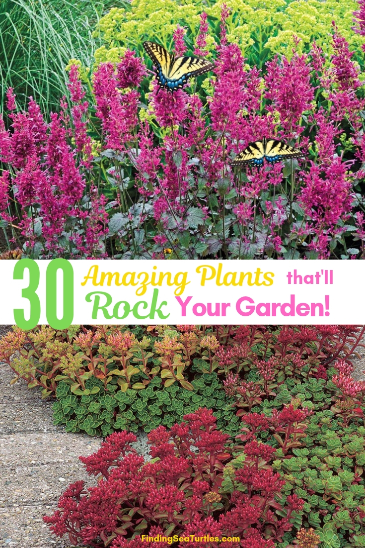 30 Amazing Plants That'll Rock Your Garden #RockGardens #Garden #Gardening #Landscape