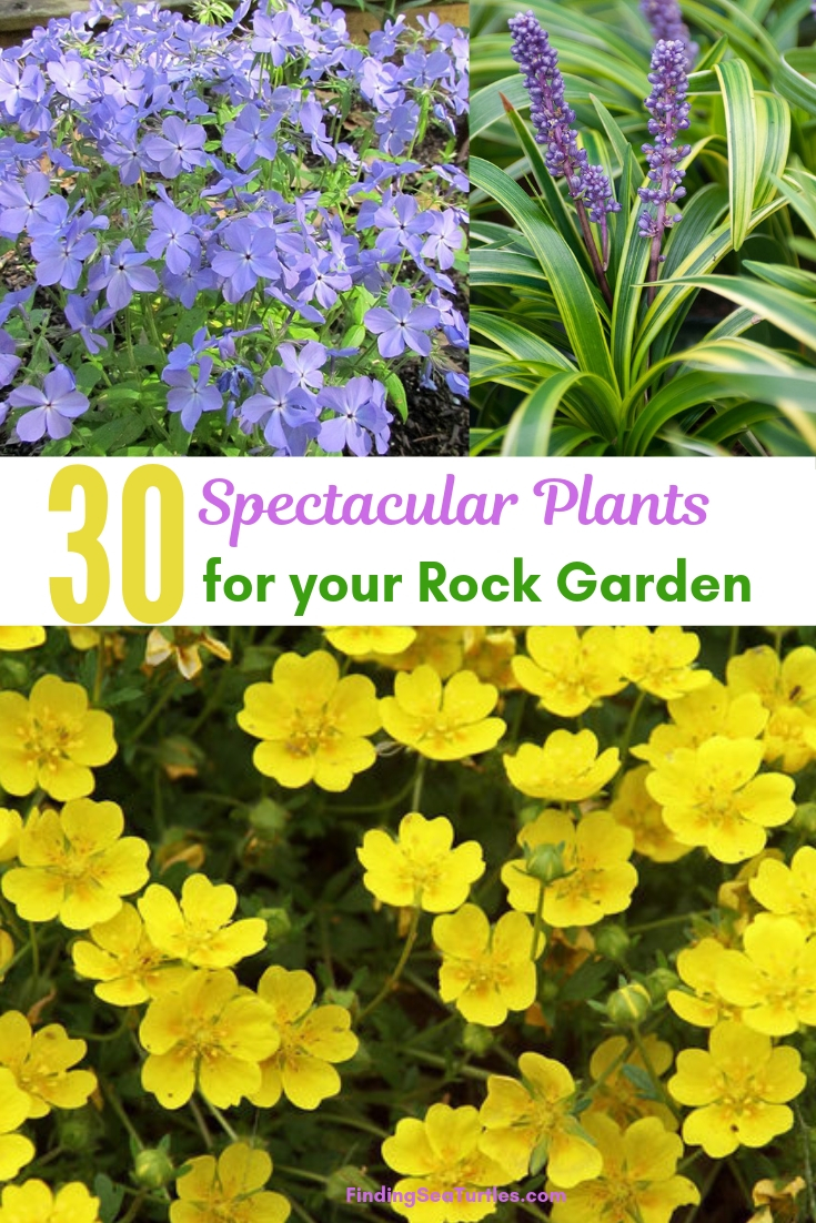 30 Spectacular Plants For Your Rock Garden #RockGarden #Garden #Gardening #Landscaping