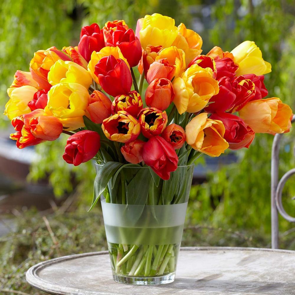 28 Spring Blooming Tulips Citrus Squeeze Mix Tulips #Tulip #Spring #SpringBulbs #PlantSpringBulbs #FallisForPlanting #SpringGarden #Garden