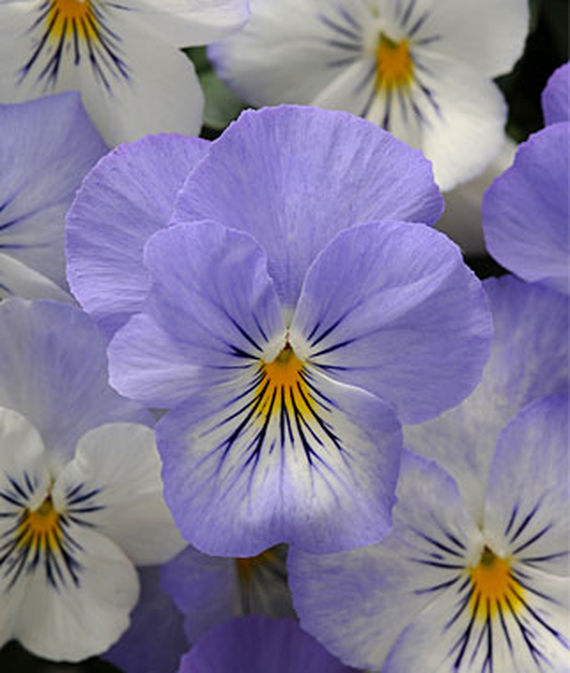 8 Fantastic Annuals to Plant this Fall