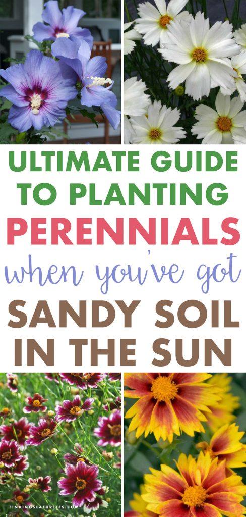 50 Sandy Soil Perennials That Like Sun #Perennials #SunLoving #SunLover #SandySoil #Gardening #Landscape #BluestonePerennials #DeerResistant #ButterflyLover