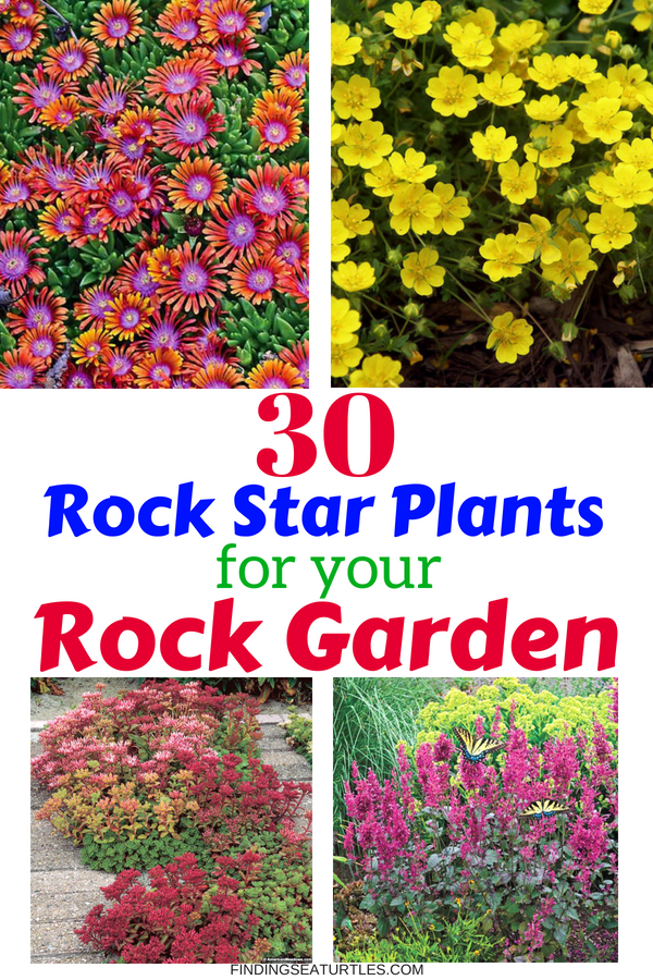 30 Rock Garden Plants That Perform Like Rock Stars #RockGarden #GroundCover #FallisForPlanting #Garden #Landscape #Organic #SpringHillNurseries
