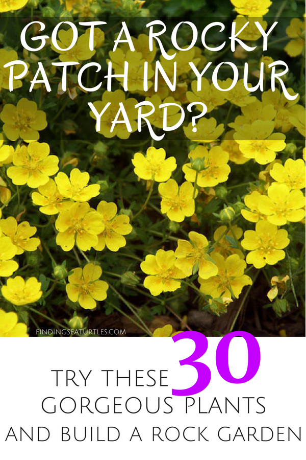 Got Rocks? Try these 30 Gorgeous plants and Build a Rock Garden #RockGarden #GroundCover #FallisForPlanting #Garden #Landscape #Organic #SpringHillNurseries