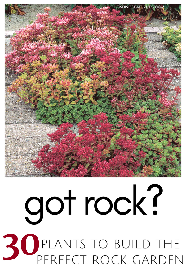 Got Rock? 30 Gorgeous Plants to build a Rock Garden #RockGarden #FallisForPlanting #Garden #Landscape #Organic #SpringHillNurseries