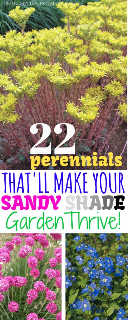 22 Sandy Soil Perennials For Shade #Perennials #ShadeLoving #ShadeLover #SandySoil #SandySoilPerennials #DroughtResistant #DroughtTolerant #Gardening #Landscape #BluestonePerennials #DeerResistant #HumidityTolerant