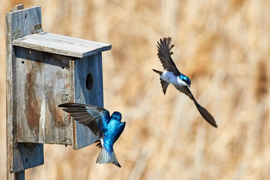 10 Blissful Birdhouses To Attract Birds That Serenade Birdhouse Photo Jongsun Lee #Birdhouses #AttractBirds #Birds #Garden #Songbirds