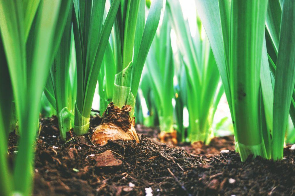 How to Plant Spring Bulbs to Maximize Curb Appeal Bulb Field Toronto, Canada Maarten Van Den Heuvel #PlantSpringBulbs #Gardening #CurbAppeal #DIY #MaximizeCurbAppeal #MaartenVanDenHeuvel #SpringBulbs #SpringBloomingBulbs #SpringFloweringBulbs