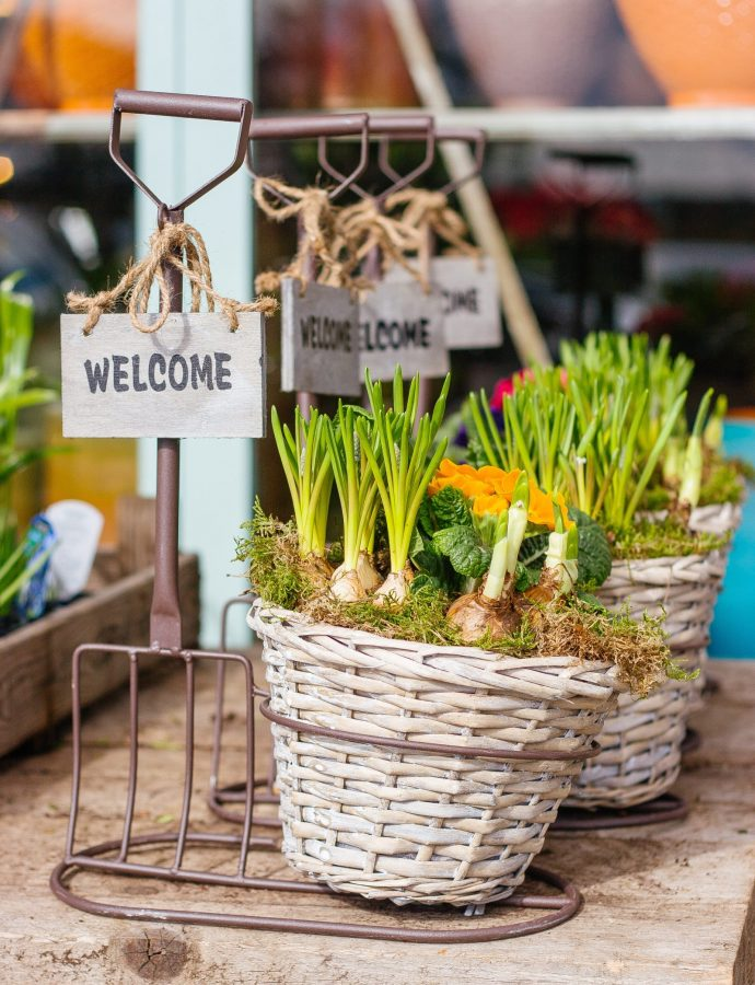 How to Plant Spring Bulbs to Maximize Curb Appeal