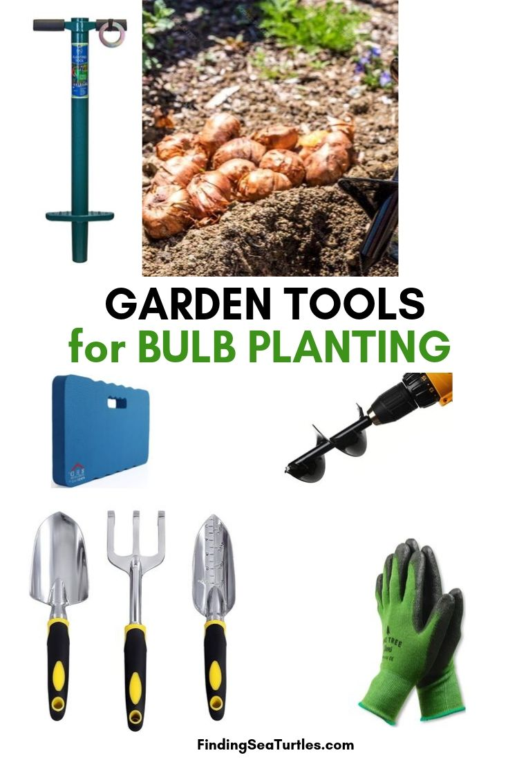 GARDEN TOOLS For Bulb Planting #PlantBulbs #Garden #Gardening #GardenTools #GardenBulbs #FallPlanting #PlantingTools #SpringBloomingFlowers#Landscape #PlantTulips #PlantDaffodils