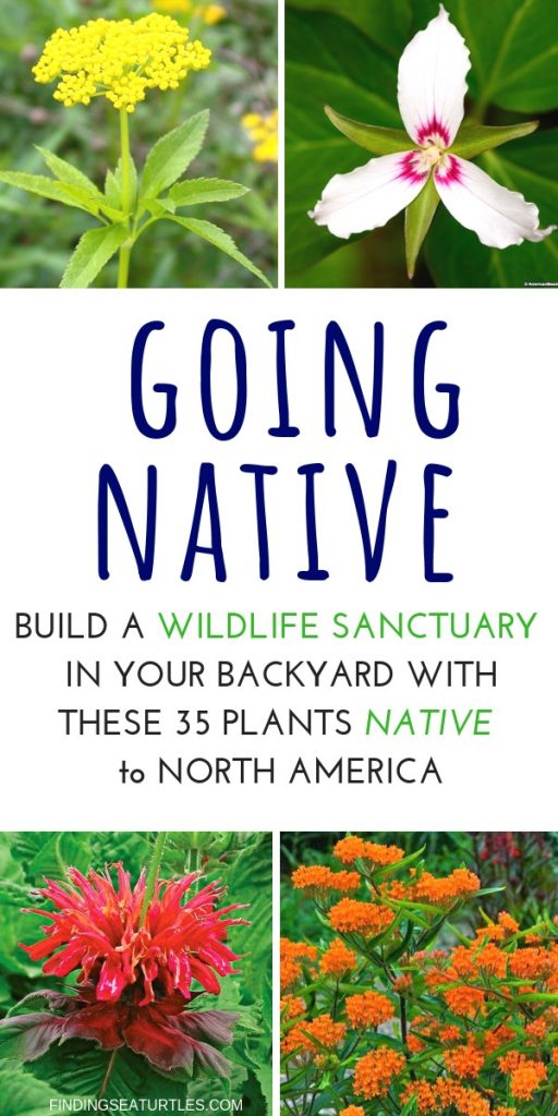 How to Create a Wildlife Sanctuary With Native Plants #Gardening #Garden #Landscape #SunLoving #Native #Wildlife #WildlifeSanctuary #BeneficialPollinators #NativePlants