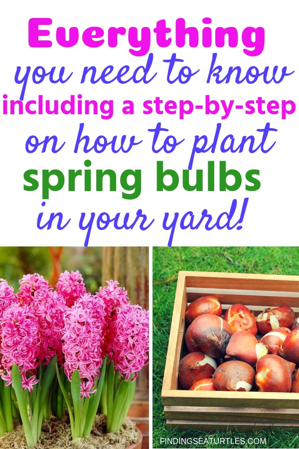 How to Plant Spring Bulbs to Maximize Curb Appeal #PlantSpringBulbs #Gardening #CurbAppeal #DIY #MaximizeCurbAppeal #SpringBulbs #SpringBloomingBulbs #SpringFloweringBulbs