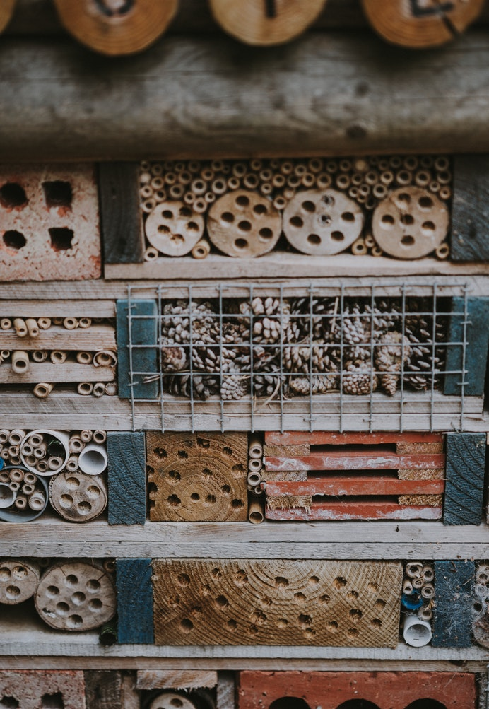 How to Build Habitats for Beneficial Wildlife Bee Hotel, Annie Spratt #Wildlife #HabitatforWildlife #ShelterforWildlife #BeneficialWildlife #BuildHabitatForWildlife #NestBoxes #BugBoxes #BeeHotels #NativePlants #BeneficialPollinators #Shelter #Habitat