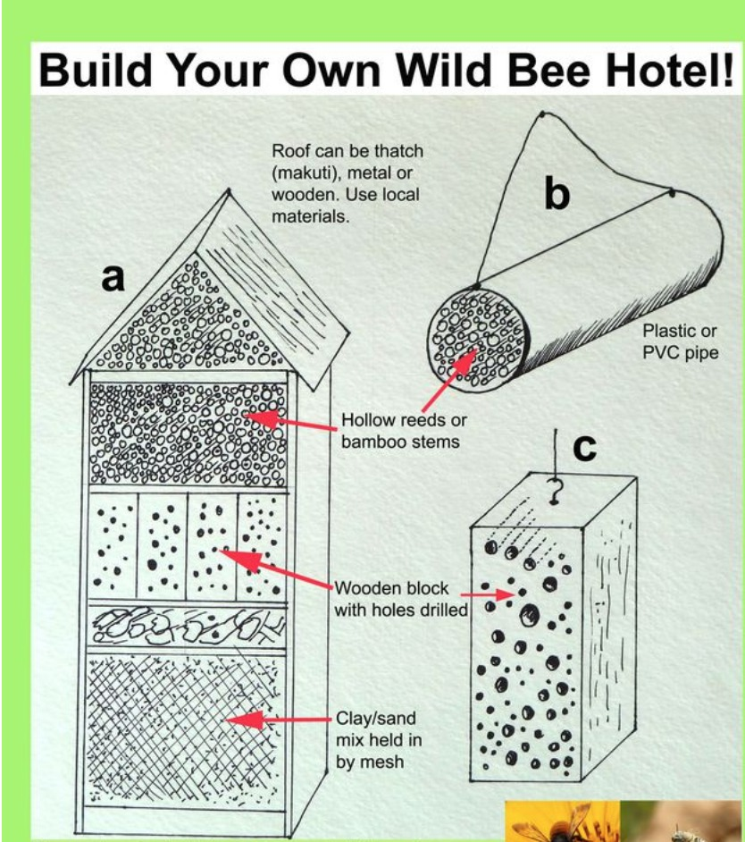 How to Build Bee Hotels for Solitary Bees Bee Hotels #BeeFriendly #SaveTheBees #Wildlife #HabitatforWildlife #BeneficialWildlife #BuildHabitatForWildlife #BeeHotels #HomeForBees #NativePlants #BeneficialPollinators