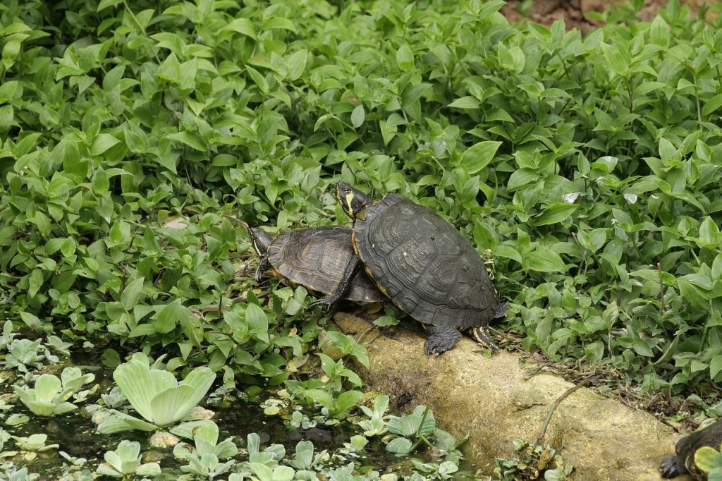 How to Build Habitats for Beneficial Wildlife Tortoise Resting #Wildlife #HabitatforWildlife #ShelterforWildlife #BeneficialWildlife #BuildHabitatForWildlife #NestBoxes #BugBoxes #BeeHotels #NativePlants #BeneficialPollinators