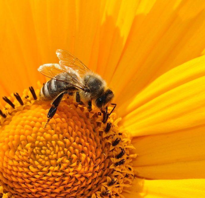 15 Bee Friendly Perennials to Make Your Garden Buzz