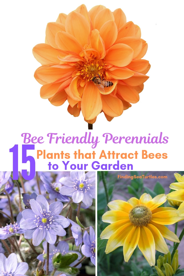 Bee Friendly Perennials 15 Plants That Attract Bees To Your Garden #Perennials #Garden #Gardening #Landscape #BeeFriendly #Bees #Pollinators #GardenPollinators #BeeFriendlyGarden