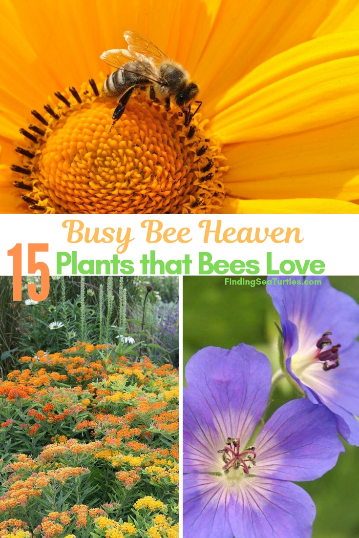 Busy Bee Heaven 15 Plants That Bees Love #Perennials #Garden #Gardening #Landscape #BeeFriendly #Bees #Pollinators #GardenPollinators #BeeFriendlyGarden #GardenBees