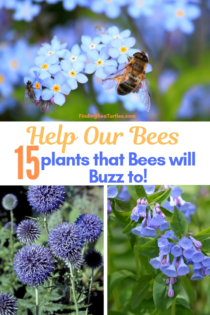 Help Our Bees 15 Plants That Bees Will Buzz To! #Perennials #Garden #Gardening #Landscape #BeeFriendly #Bees #Pollinators #GardenPollinators #BeeFriendlyGarden #GardenBees
