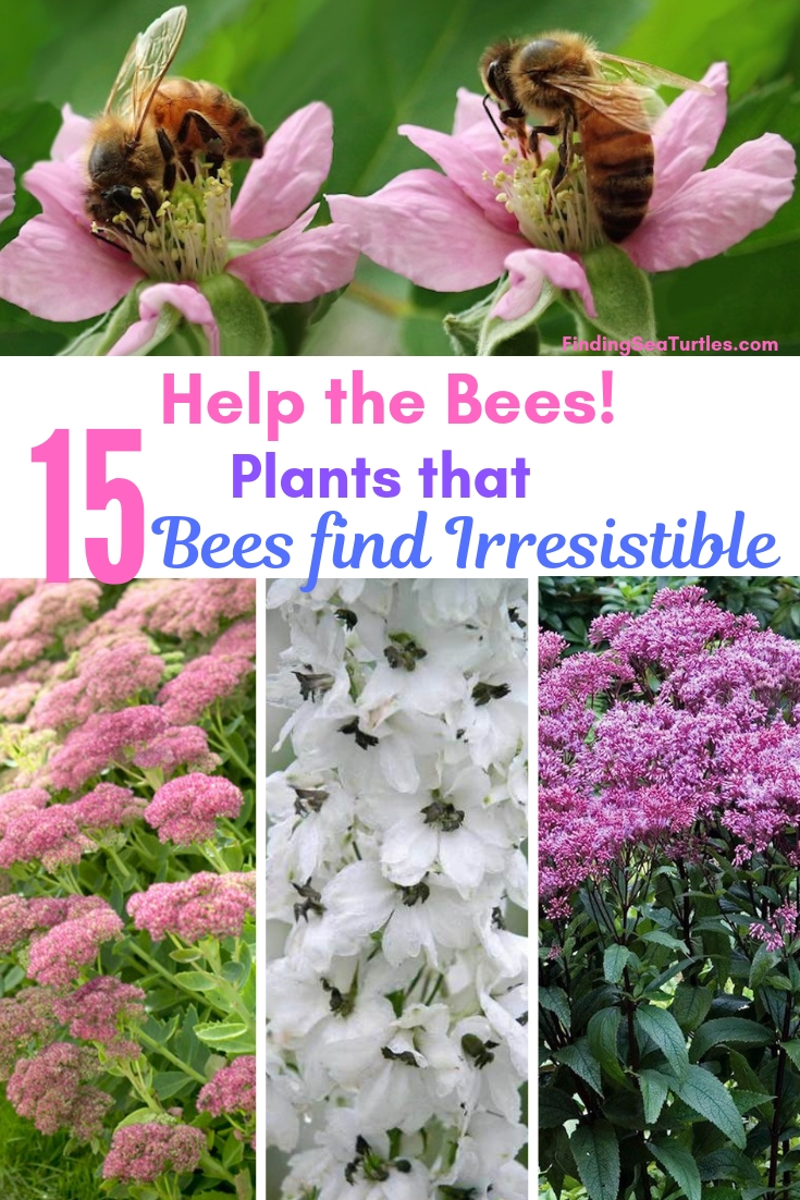 Help The Bees! 15 Plants That Bees Find Irresistible #Perennials #Garden #Gardening #Landscape #BeeFriendly #Bees #Pollinators #GardenPollinators #BeeFriendlyGarden #GardenBees