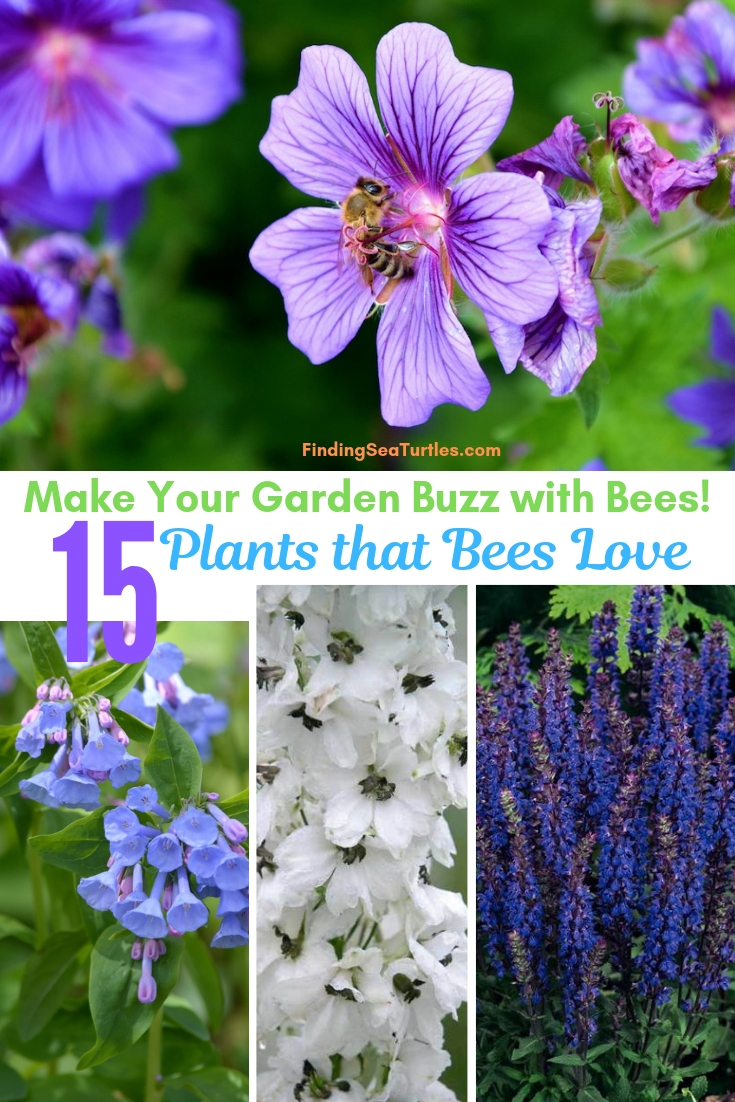 Make Your Garden Buzz With Bees 15 Plants That Bees Love #Perennials #Garden #Gardening #Landscape #BeeFriendly #Bees #Pollinators #GardenPollinators #BeeFriendlyGarden