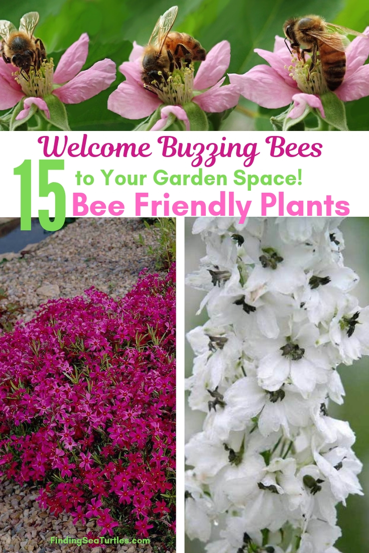 Welcome Buzzing Bees To Your Garden Space! 15 Bee Friendly Plants #Perennials #Garden #Gardening #Landscape #BeeFriendly #Bees #Pollinators #GardenPollinators #BeeFriendlyGarden