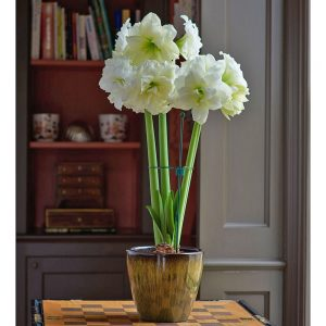 27 Best Gifts for Gardeners - Amaryllis Alfresco Bulb With Resin Cachepot #Gifts #Gardening #GardeningGifts #GardenersGifts #GardenGear #GardenEssentials #Garden #GardensPlants