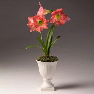 18 Amaryllis Christmas Gifts For Giving Belladonna Amaryllis In Mini Urn Pot #Gifts #Gardening #GardeningGifts #GardenersGifts #GardenFlowers #Amaryllis #Christmas