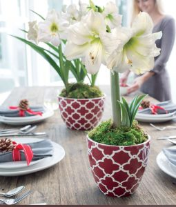 18 Amaryllis Christmas Gifts For Giving Merry & Bright Amaryllis #Gifts #Gardening #GardeningGifts #GardenersGifts #GardenFlowers #Amaryllis #Christmas