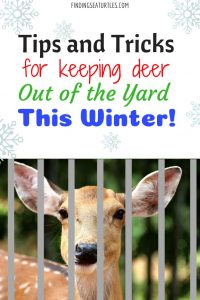 How to Keep Deer Out of Your Garden During the Winter #DeerRepellent #Gardening #Garden #DeerRepellentSpray