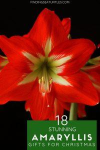 18 Amaryllis Christmas Gifts For Giving #Gifts #Gardening #GardeningGifts #GardenersGifts #GardenFlowers #Amaryllis #Christmas