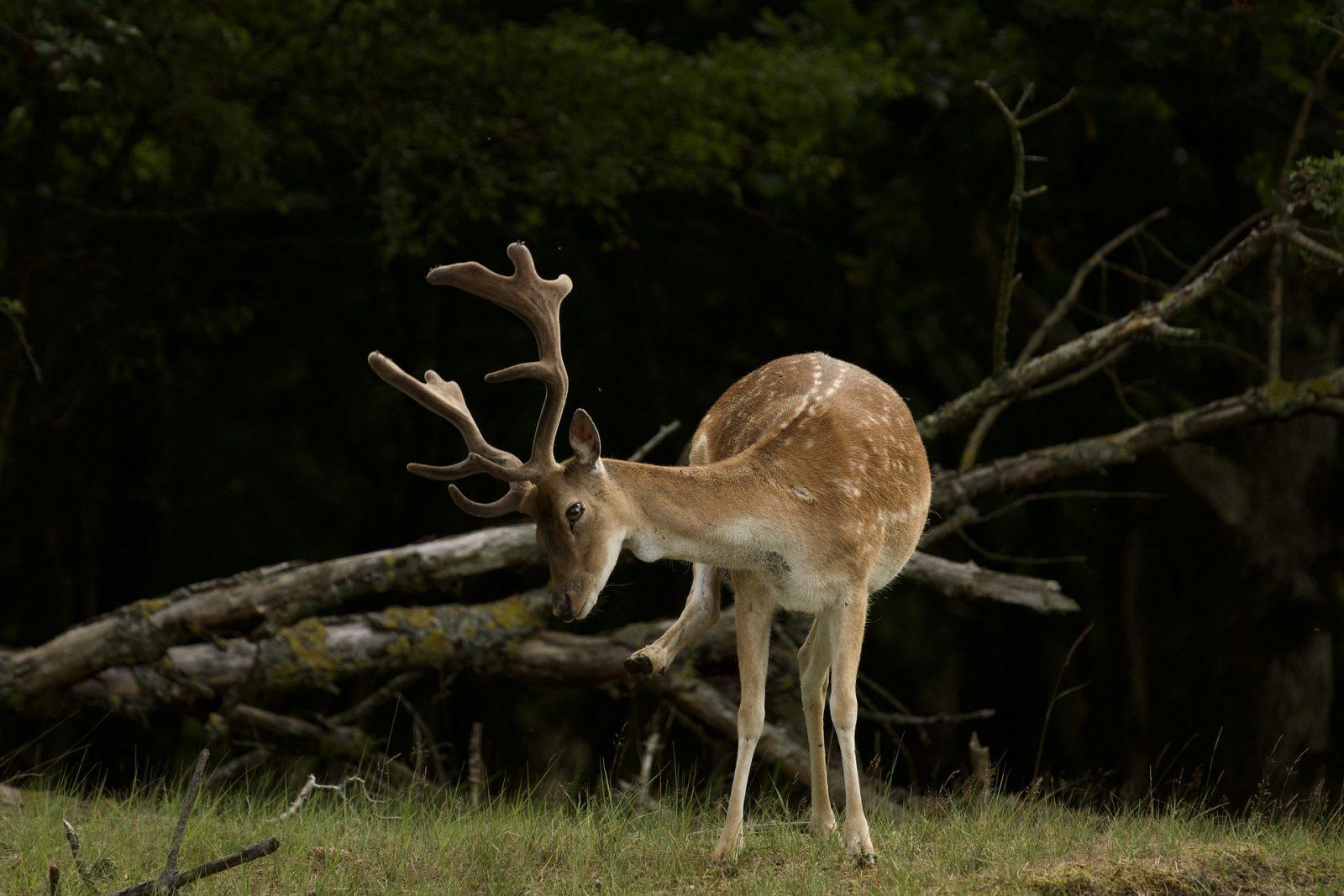 How to Protect Trees From Deer Rub Buck Rubbing On Tree #BuckRub #AntlerRub #DeerRub #DeerDamage #TreeTrunkDamage #ProtectTrees #TreeDamage #TreeWrap