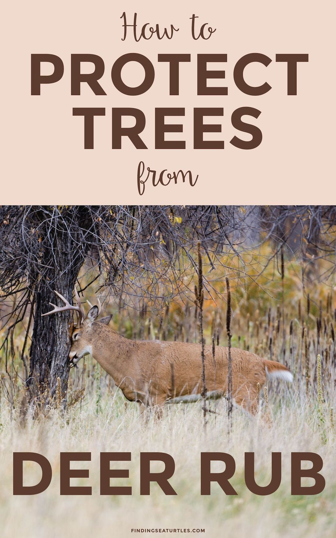 How To Protect Trees From Deer Rub