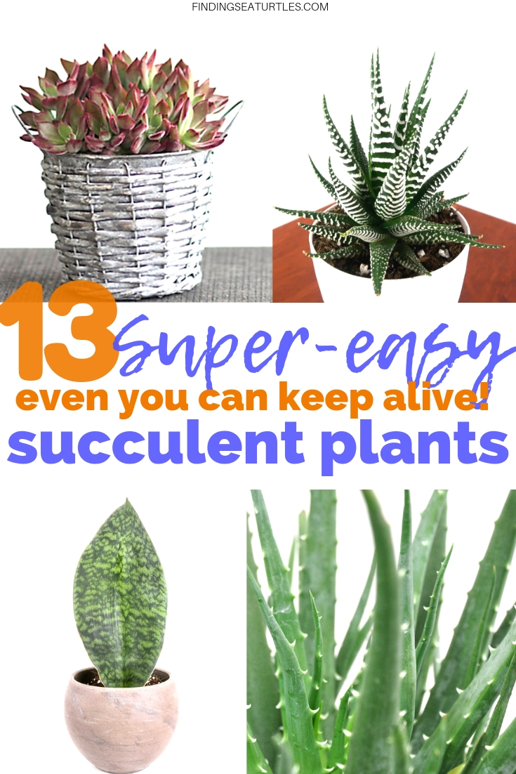 13 Easy Succulents Even You Can Keep Alive #Succulents #Garden #Gardening #HousePlants #Decor #HomeDecor #GrowYourOwn #Affordable #DIY #BudgetFriendly