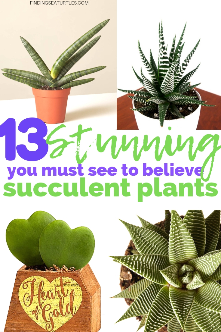 13 Stunning Succulents You Must See #Succulents #Garden #Gardening #HousePlants #Decor #HomeDecor #GrowYourOwn #Affordable #DIY #BudgetFriendly
